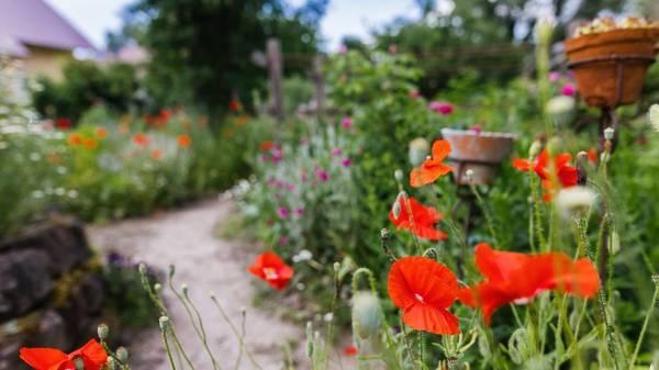 Apps für den Garten: Die besten digitalen Helfer für Pflanzenfreunde