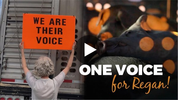 One Voice, for Regan by Barbara Helen and Shaun Monson