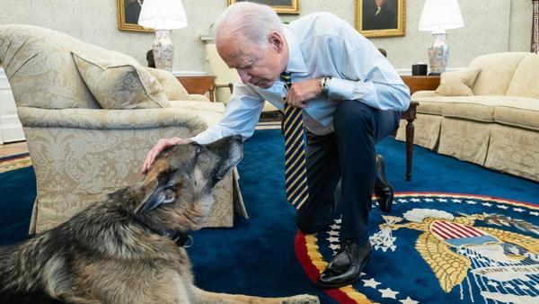 Bidens announce their 'beloved' German Shepherd Champ has died