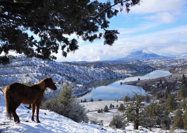 Wild Horses: Analysis of Issues and a Novel Science-Supported Solution