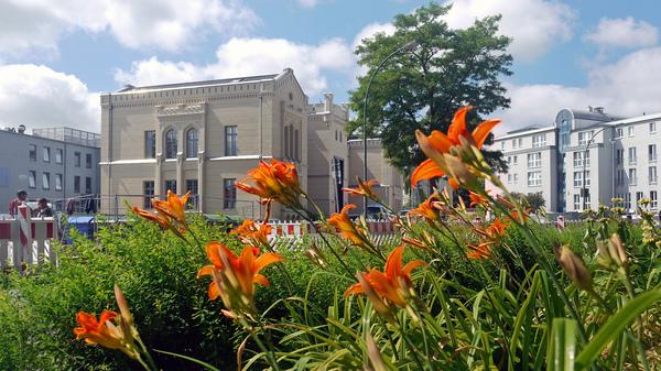 Blumen in Wismar Foto: Helmut Kuzina