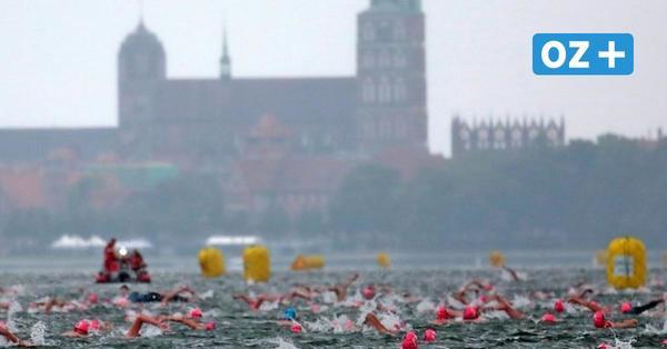 Grünes Licht für Sundschwimmen: Mit diesen Regeln kann das Groß-Ereignis in Stralsund starten