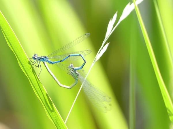 Liebe liegt in der Luft (Foto: Heidi Bornschein)