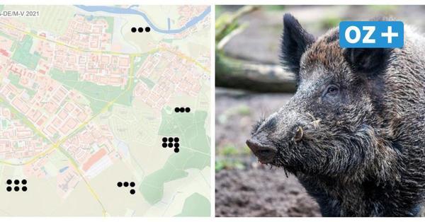 Hier haben die Jäger in Greifswald schon auf Wildschweine geschossen