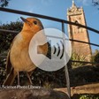 Quantum compass might help birds 'see' magnetic fields