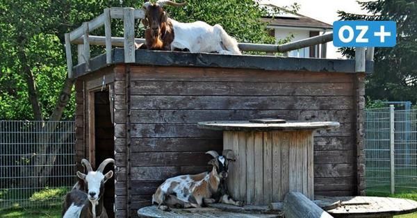 Hitzetipps für Tiere: So kommen Hund, Katze und Co. in MV gut durch den Sommer