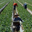 More Freedom? Supreme Court Strengthens Property Rights in Case Involving Labor Organizing on CA Farms