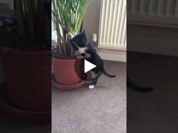 The Great Kitten vs Plant Fight