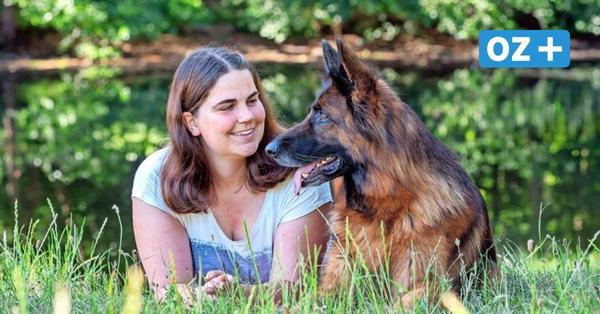 Sommer mit Hund: 7 Tipps für Ausflüge und Spaziergänge in und um Rostock