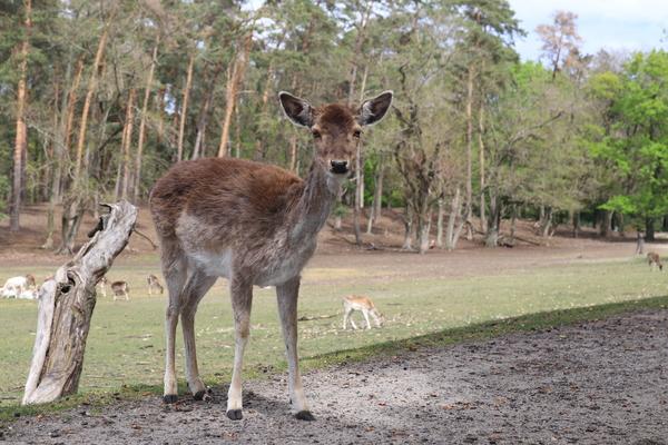 Im Wildpark kommt man an manche Tiere ganz nah heran. Foto: Nadine Pensold