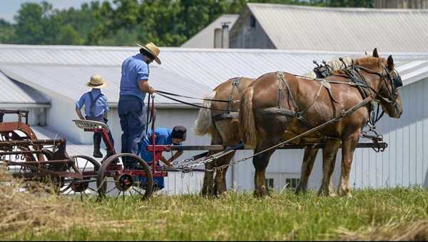 Amish community vaccine rates trail behind as they put faith in God's will and herd immunity