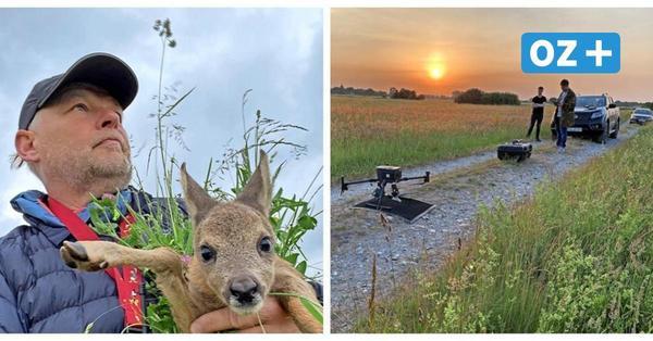 Tierrettung auf Rügen: Fast 150 Rehkitze entkamen dank Drohnen dem Tod