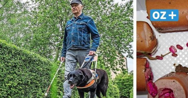 Blindenhund Hans in Boltenhagen mehrfach attackiert: Besitzer weiß nicht weiter