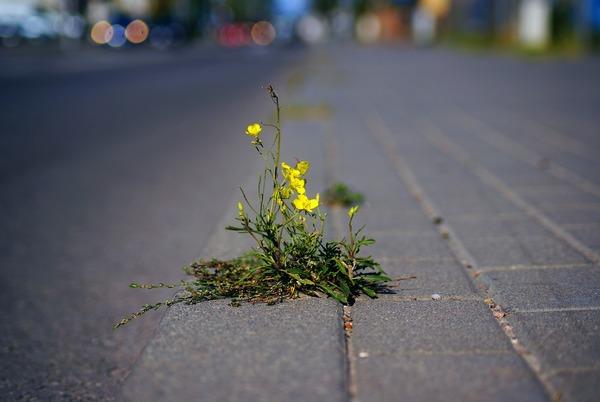 """In vielen urbanen Räumen fällt die """"Stadtnatur"""" eher kümmerlich aus. Quelle: pixabay"""