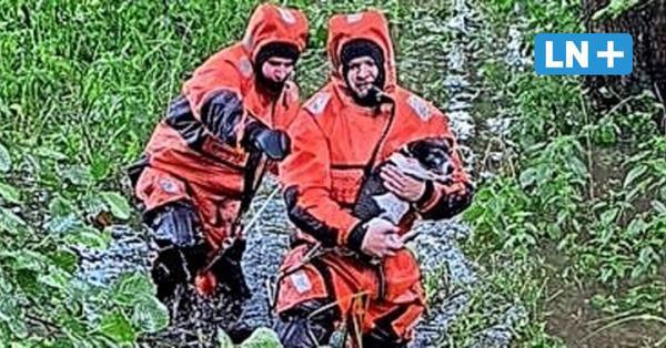 Bad Schwartau: Feuerwehr rettet Hund vor dem Ertrinken