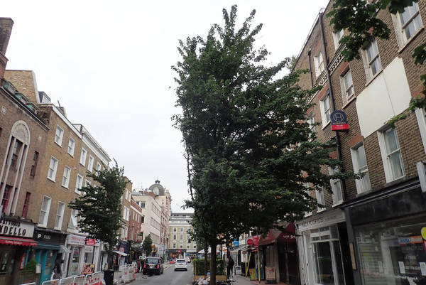 Goodge Street trees hacked in half for bus diversion