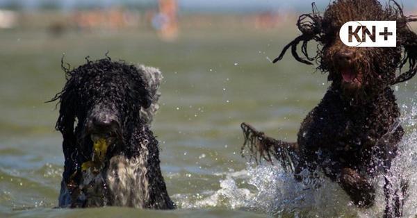 Urlaub mit Hund an der Ostsee: Tipps, Tricks und eine Hundestrand-Karte
