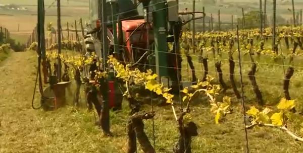 9 vignerons signent une charte de viticulture durable . - 9 wijnbouwers ondertekenen charter duurzame wijnbouw