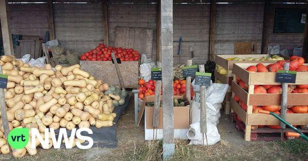 1 agriculteur biologique sur 4 en Flandre se trouve en Flandre Occidentale. - 1 op de 4 bioboeren in Vlaanderen is een West-Vlaming
