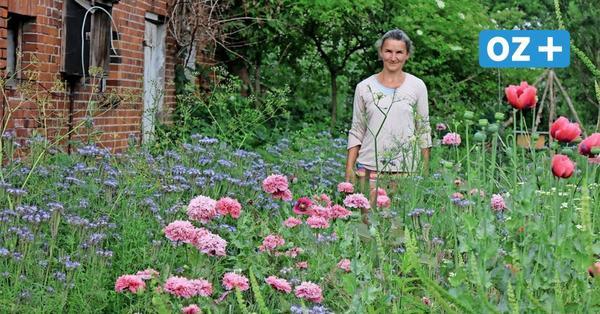 Slowflower-Trend in Nordwestmecklenburg: So schön blüht's auf dem Sonnenhof