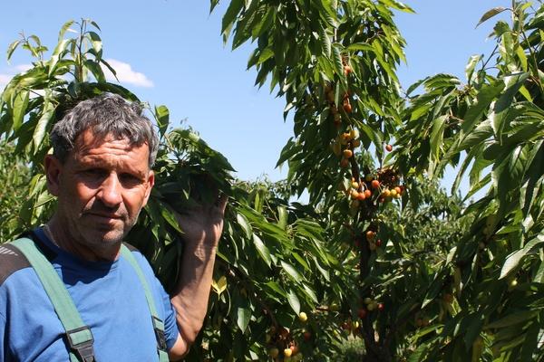 Silvio Lienert betreibt im Havelland einen Obsthof. Selbstpflücker sind willkommen. Foto: Ulrich Nettelstroth