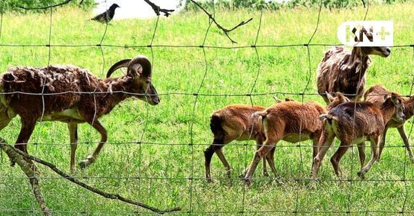 In den Tiergehegen ist viel Nachwuchs zu sehen