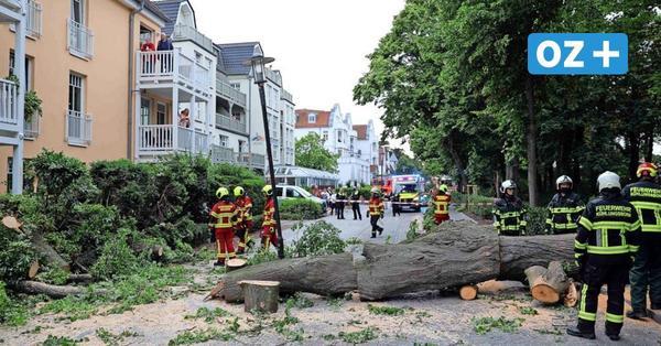 Kühlungsborn: Baum stürzt plötzlich um und verfehlt Urlauber nur knapp