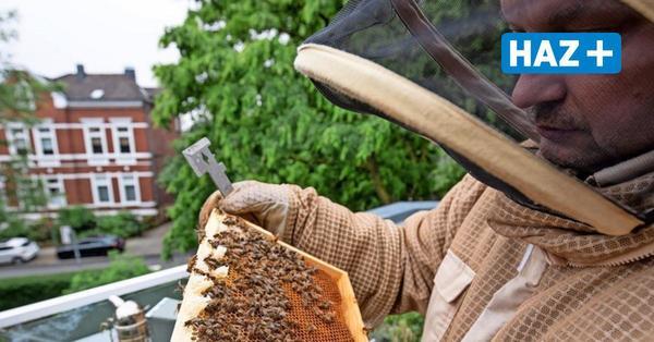 Bienen auf dem Balkon: Immer mehr Menschen imkern in der Stadt