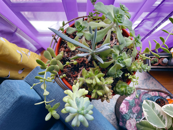 My succulent bowl just keeps on growing.