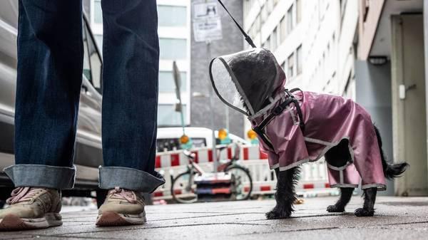Tierisch gut angezogen: Worauf Sie bei Hundebekleidung achten sollten