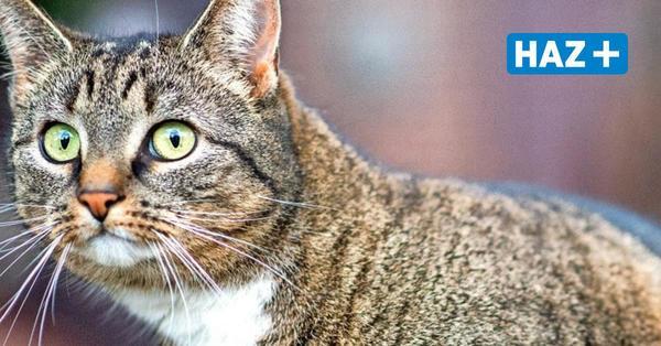 Internet für die Katz: Vodafone jubelt Frau Vertrag für ihren Kater unter