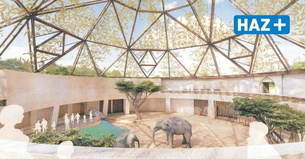 Zoo Hannover gibt Elefantenzucht auf und schafft Orang-Utans an