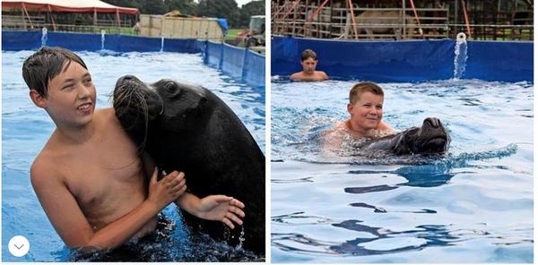 In Zinnowitz schwimmen Zuschauer mit einem Seelöwen