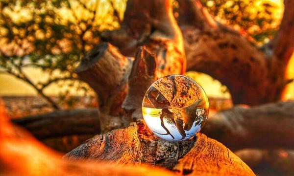 Schlafende Bäume (Foto: Anke Hanusik)