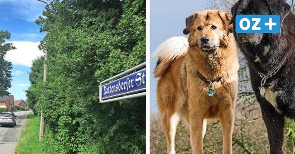 Sorgen in Schönberg: Erneut Mann von Hunden attackiert