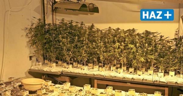 Polizei entdeckt in ausgebrannter Wohnung zerstörte Drogenplantage