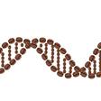 Coffee Basics: What Is Arabica Coffee?