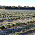 Frosts Hit Coffee Growers In Brazil