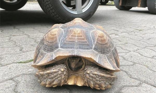 Eine Schildkröte geht stiften - Heidekreis - Walsroder Zeitung