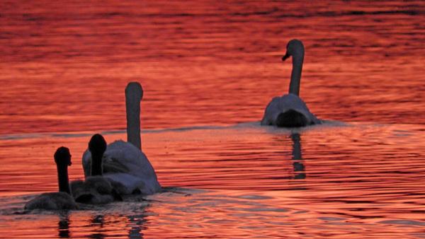 Auf der Havel in den Sonnenuntergang. (Foto: Winfried Ganzer)