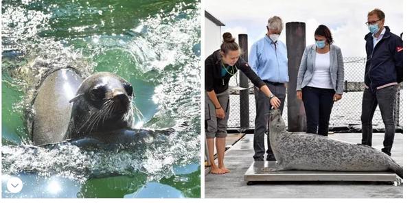 Umzug steht an: Robben des Rostocker Zoos erhalten Ausweichquartier in Warnemünde