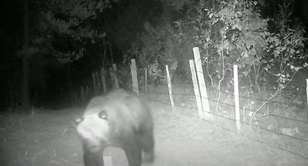 Griz Bites Camera