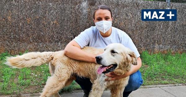 """Rückgabe der """"Corona-Tiere"""": Im Zossener Tierheim häufen sich die Anfragen"""