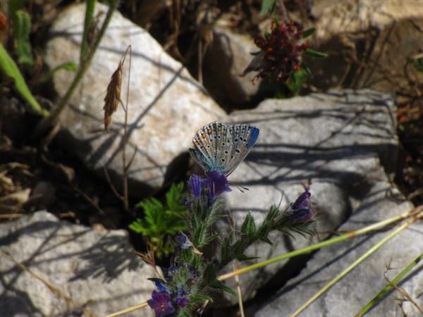 Gard was joyously covered in butterflies.