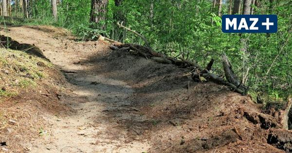 Falkensee: Eigentümer verzweifelt - das sind die Folgen illegaler Partys im Wald