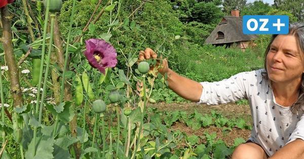 Solidarische Landwirtschaft in NWM: So gibt's Bio-Gemüse im Abo