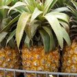 """Pineapple prices reportedly rose by 74% in South Africa week-on-week, as people sought to make home brew after a new alcohol sales ban """""""
