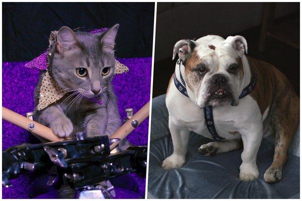 Perros y gatos: las docuseries peludas de Netflix que son tan cuquis como tu mascota