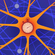 Neurons Unexpectedly Encode Information in the Timing of Their Firing | Quanta Magazine