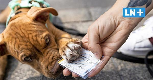 Stadtverkehr: Hund muss mehr als Frauchen zahlen